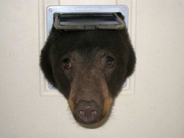 Profile pic for user confrontedbybears