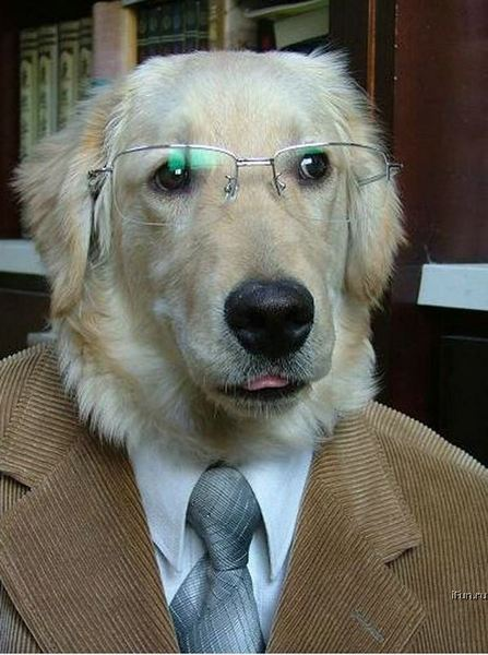 Profile pic for user Professor_Dog