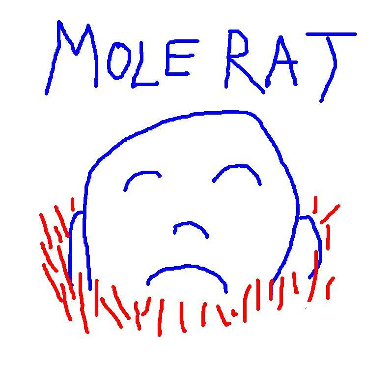 Profile pic for user MOLE-RAT
