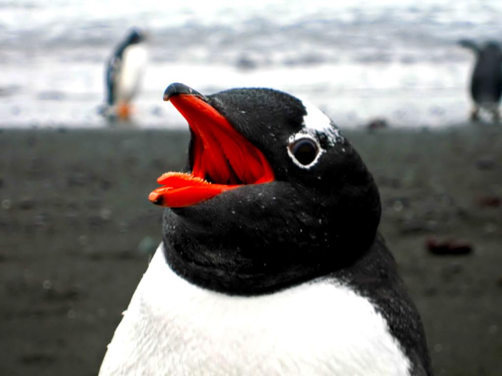 Profile pic for user happypenguin