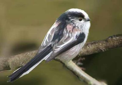 Profile pic for user long_tailed_tit