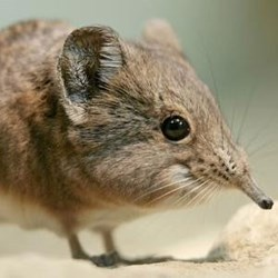 Profile pic for user elephantshrew